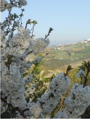 Wiosna w Słowenii